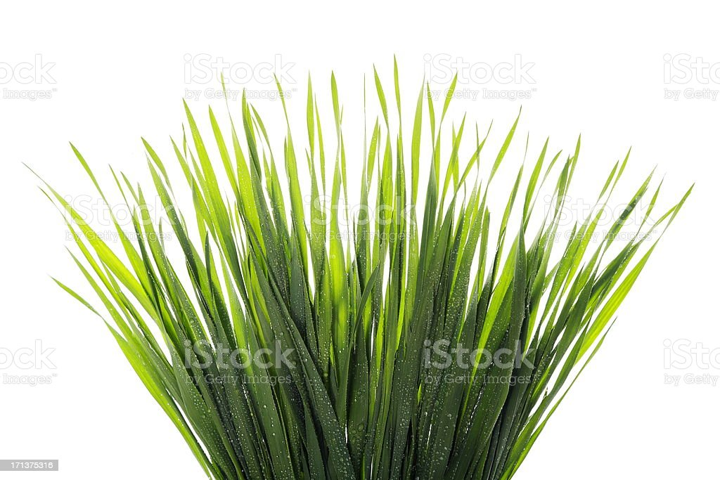 Water Droplets on Grass royalty-free stock photo