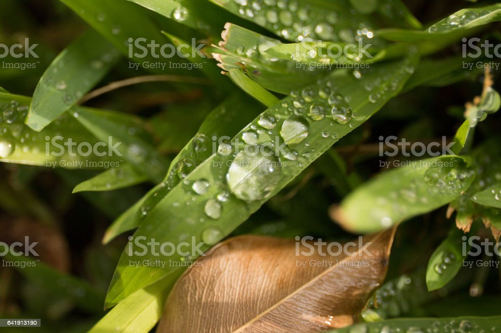 Water Droplets on Grass stock photo