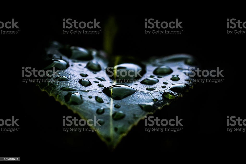 Water Droplets on Heart Shaped Leaf royalty-free stock photo