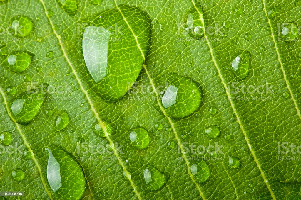 Water Droplets on Leaf royalty-free stock photo