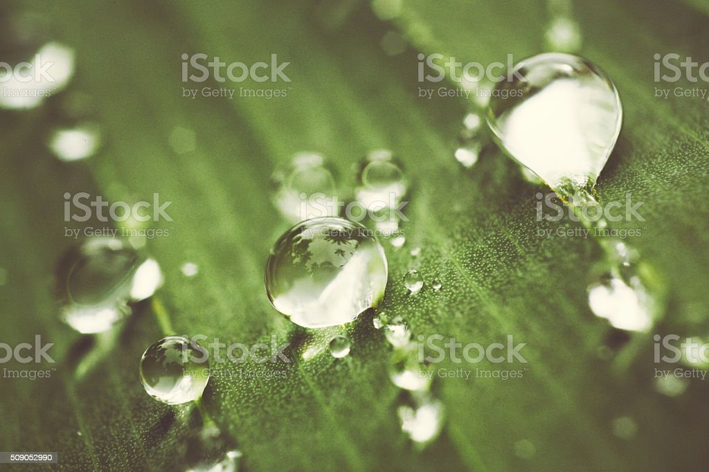Water drops after rain stock photo