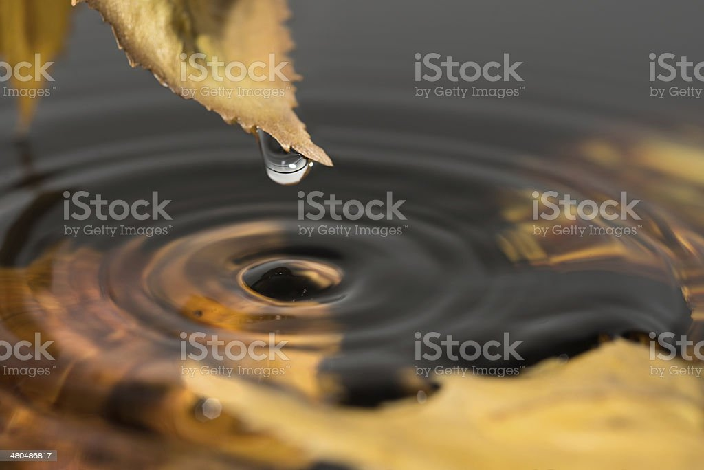 Water drops from a yellow leaf stock photo