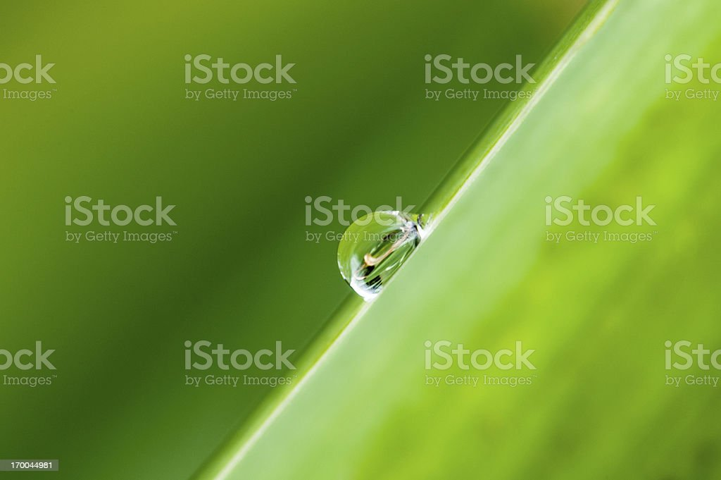 Water drops on a fresh green leaf after the rain royalty-free stock photo