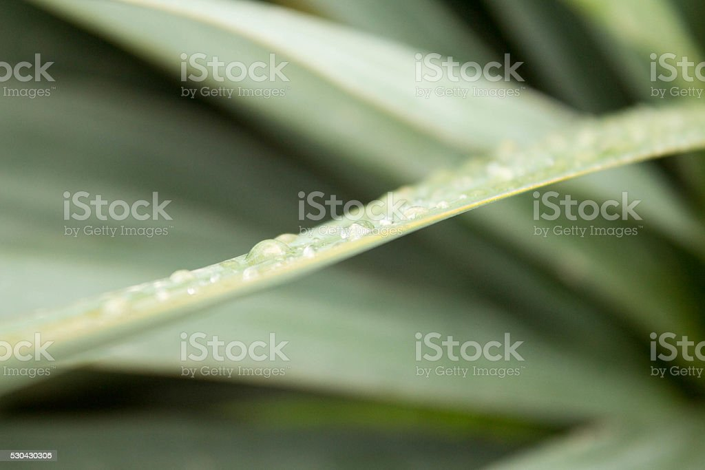 Water drops on a grass after rain stock photo