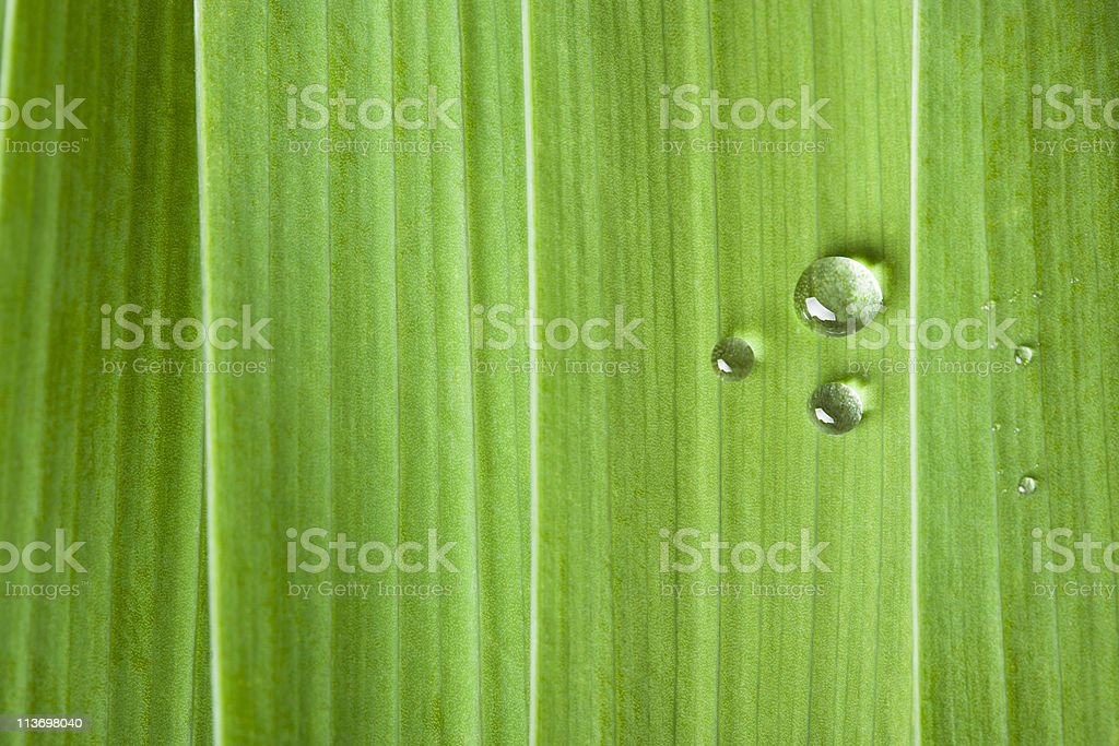 Water drops on a leaf stock photo