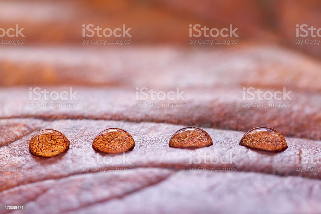 Water Drops On Autumn Leaf royalty-free stock photo