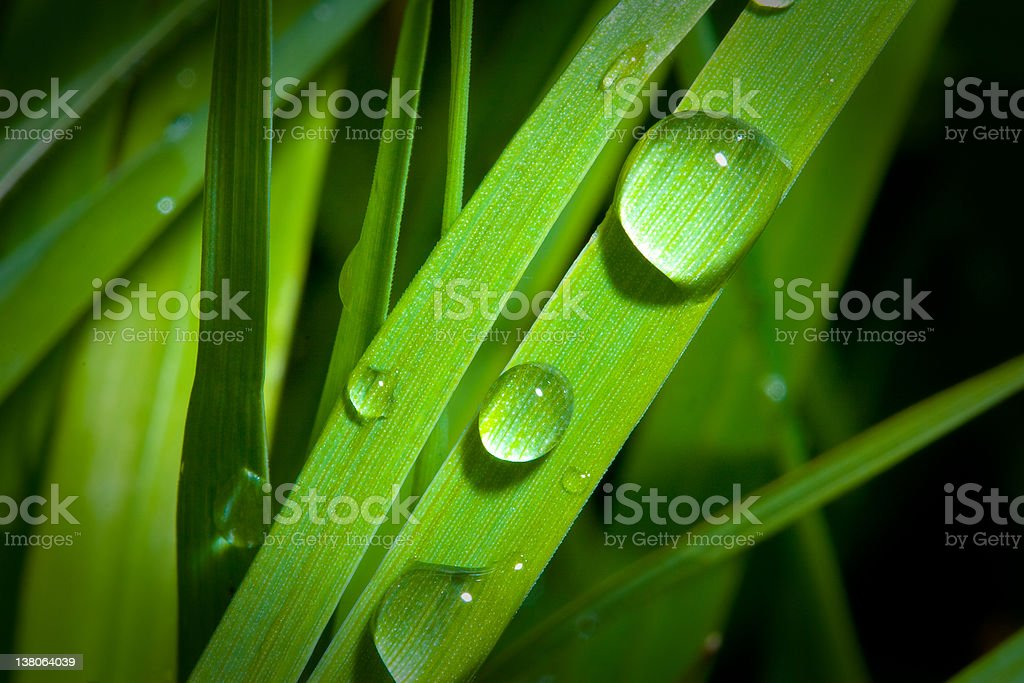 Water drops on grass royalty-free stock photo