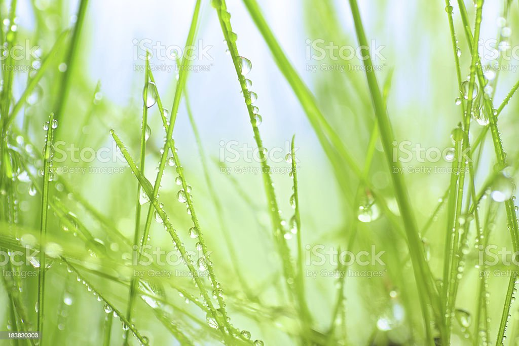 Water drops on green grass - shallow DOF royalty-free stock photo