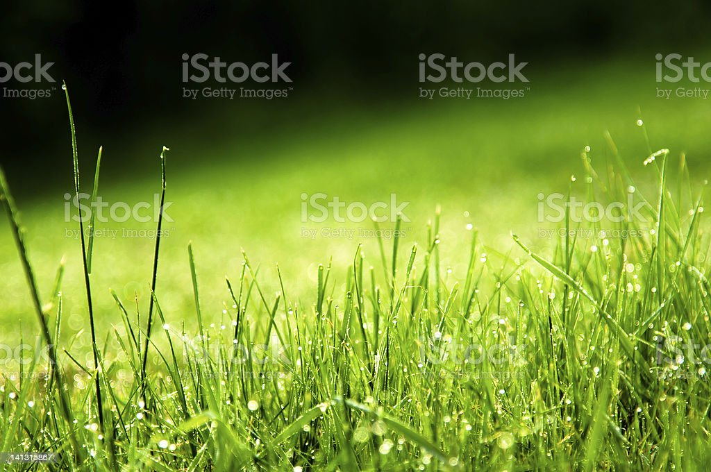 Water Drops on green grass with black background stock photo