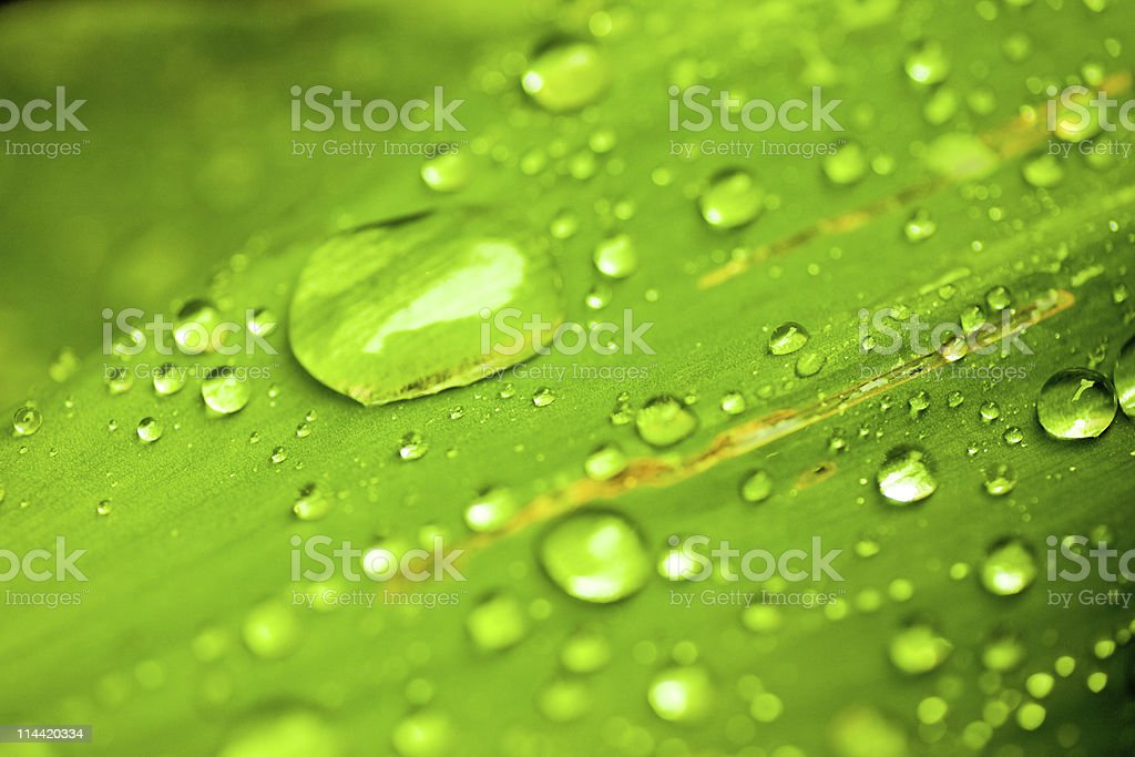 Water drops on green leaf royalty-free stock photo