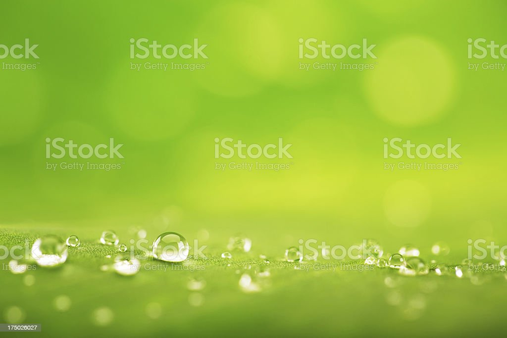 Water drops on green leaf stock photo