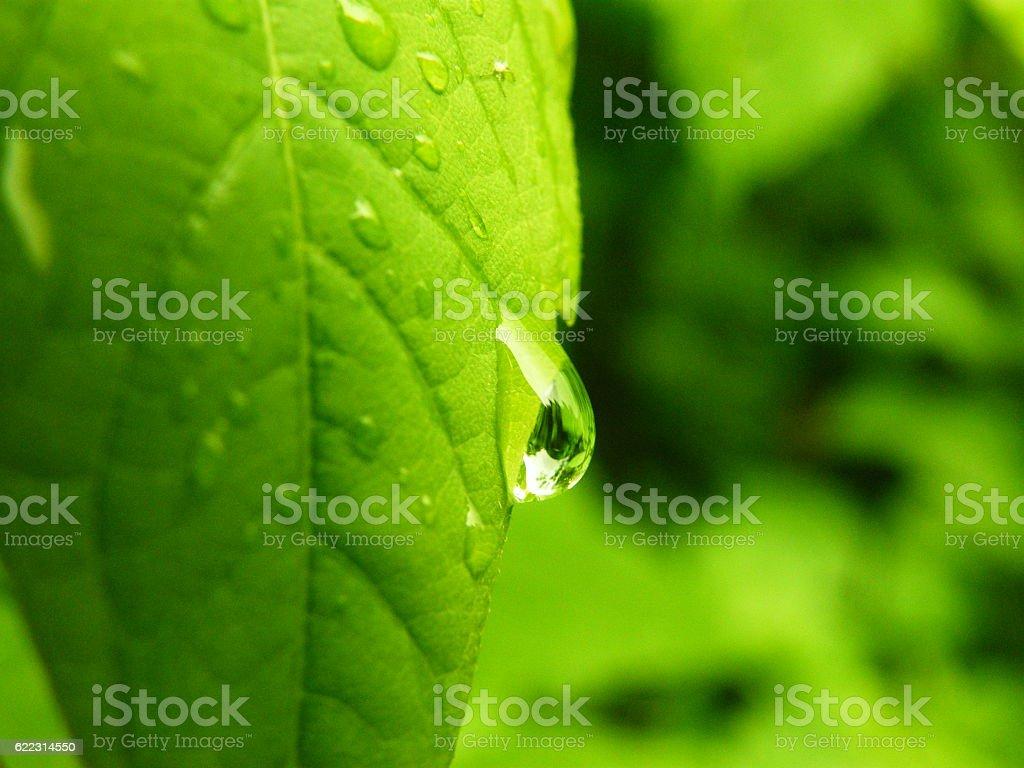 Gouttes d'eau sur les feuilles vertes  photo libre de droits