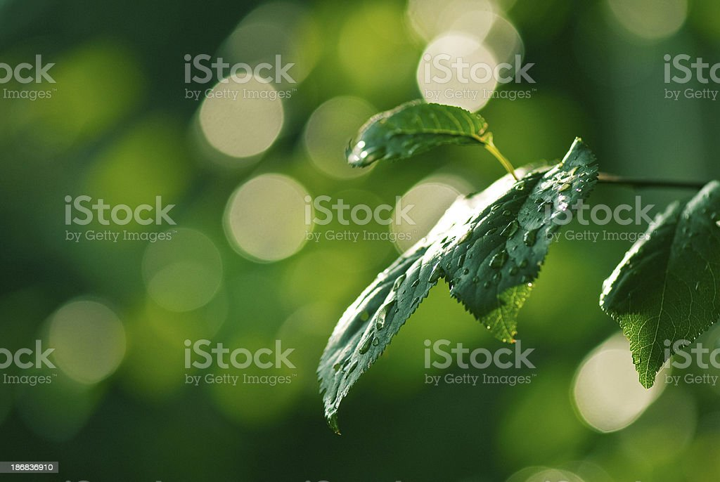 Water drops on green royalty-free stock photo