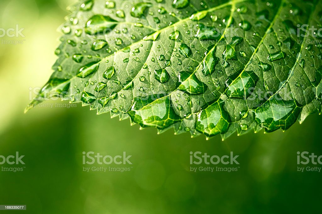 Water drops on leaf in sunshine stock photo
