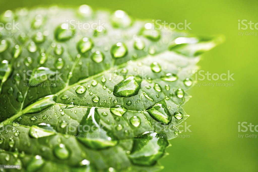 Water drops on leaf in sunshine royalty-free stock photo