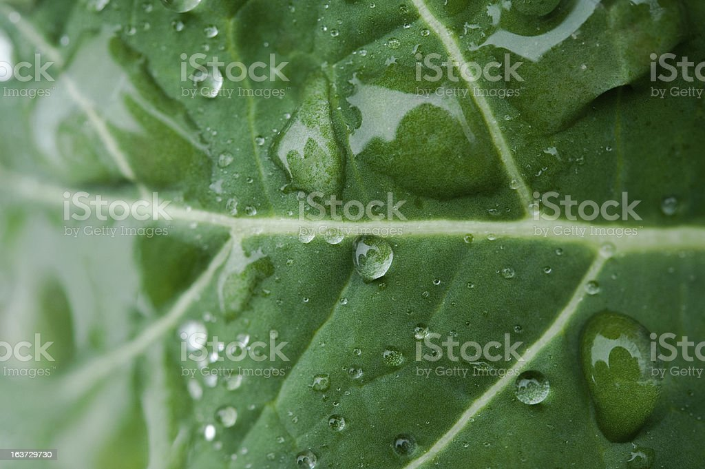 Water drops on plant leaf royalty-free stock photo