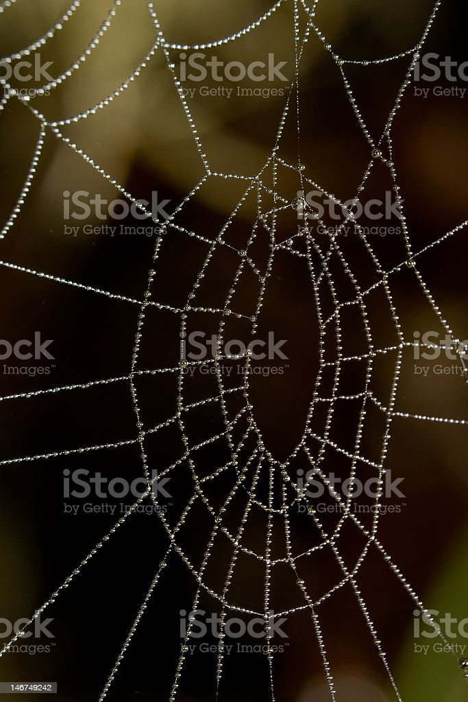 Water drops on spider net royalty-free stock photo