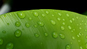 Water Drops on The Big Green