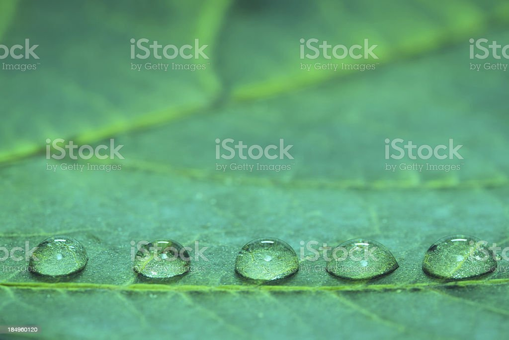 Water Drops royalty-free stock photo