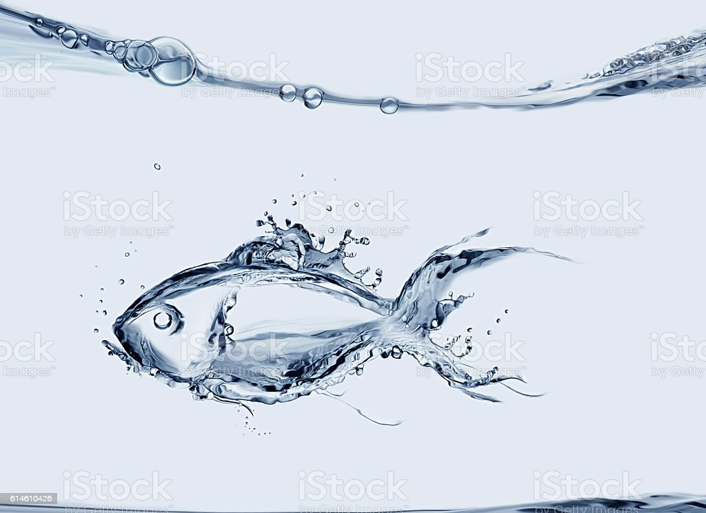 Water Fish royalty-free stock photo