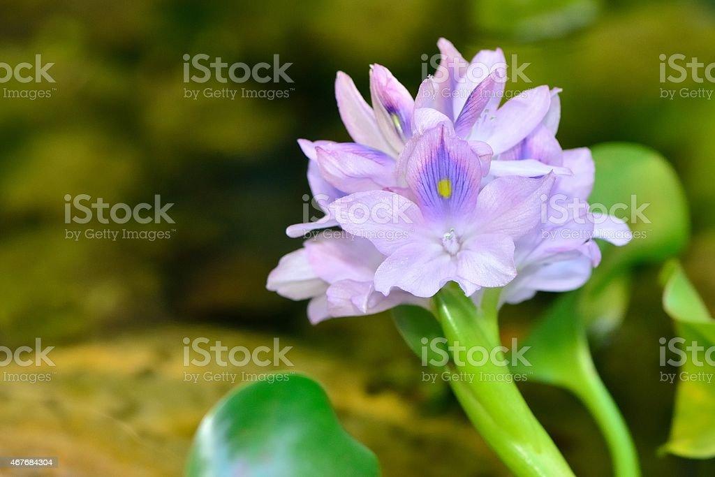 water flower stock photo