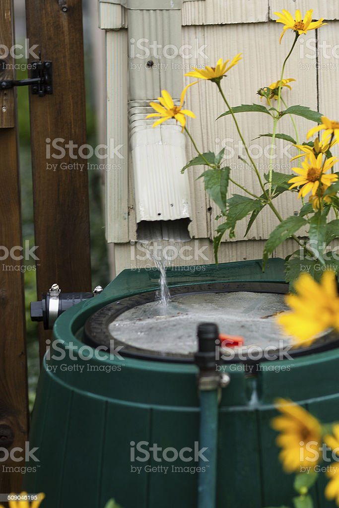Water flowing into rain barrel stock photo