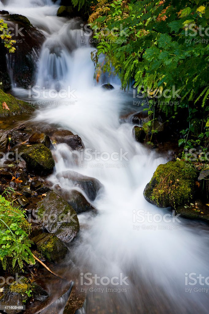 Water flowing through a lush forest stock photo