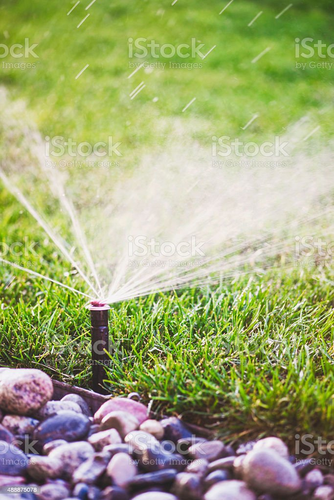Water from sprinkler spraying over freshly laid sod stock photo