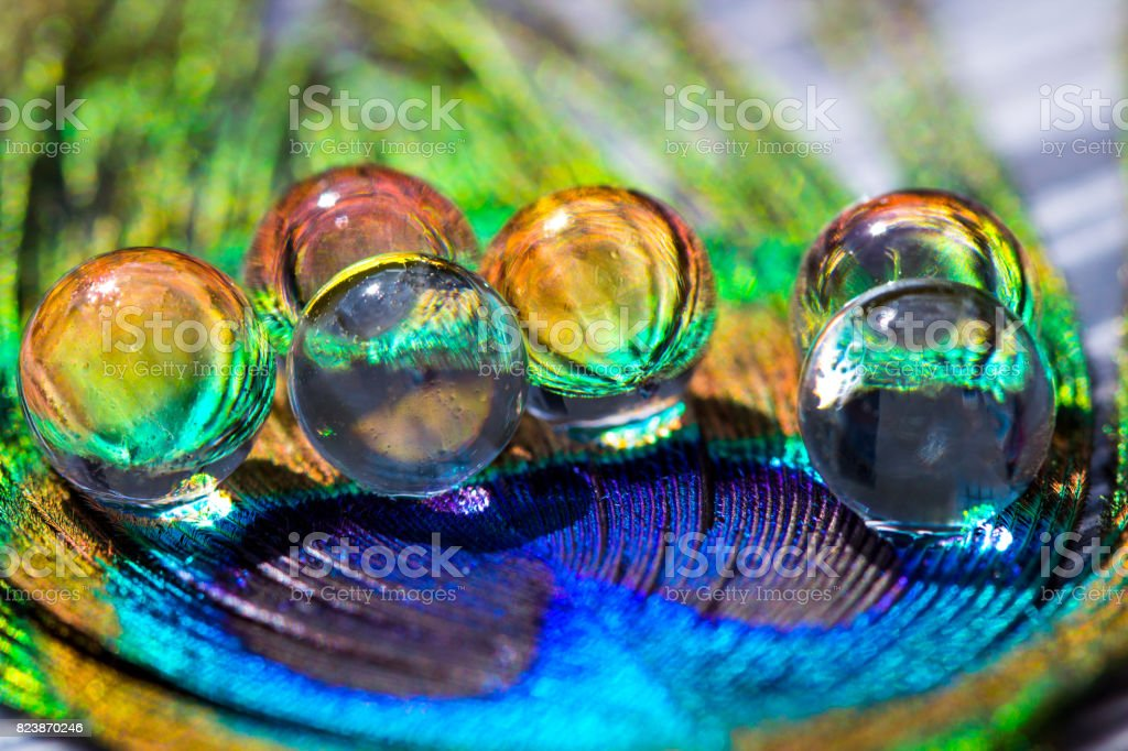 Water gel balls at peacock feathers. Beautiful transfusion of light and colors in the middle of the hydrogel. stock photo