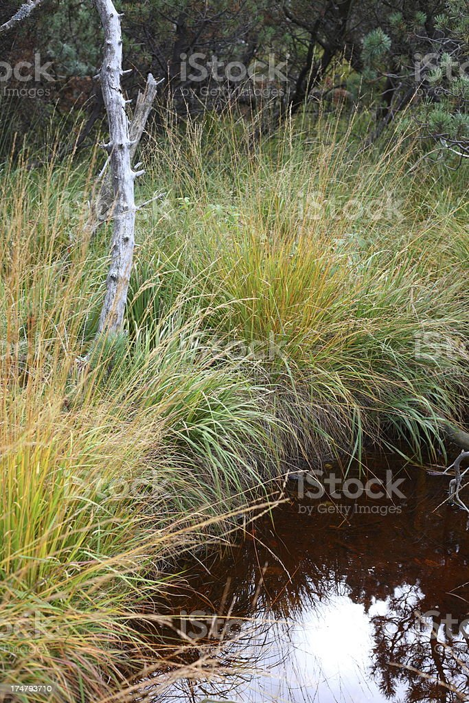 water hole in moor with meadow Black Forest royalty-free stock photo