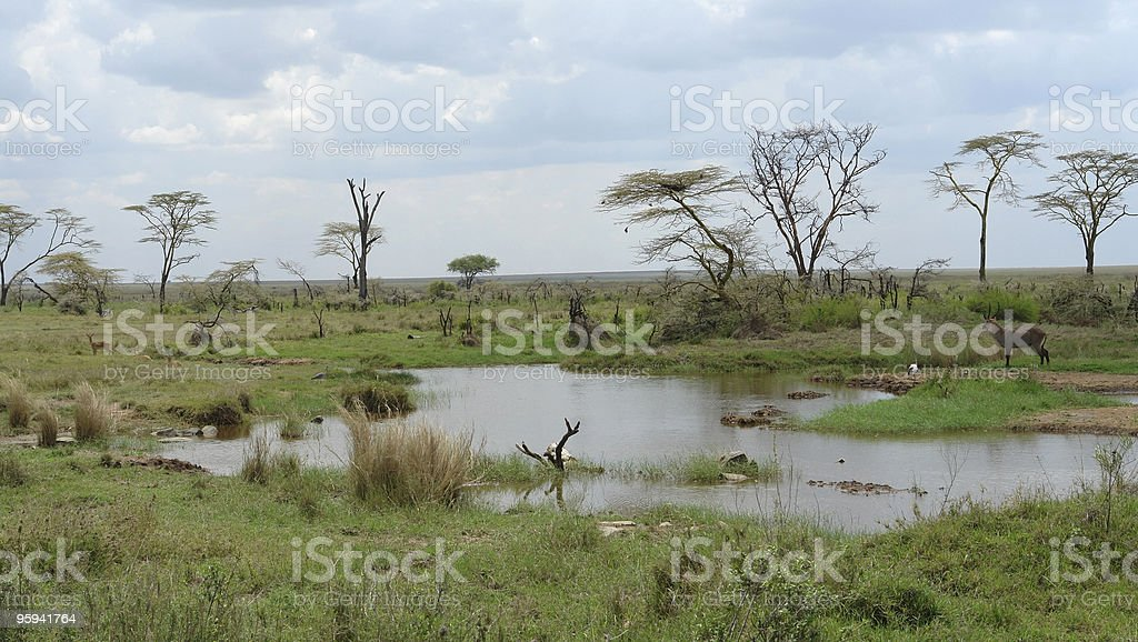 water hole in the african Serengeti royalty-free stock photo
