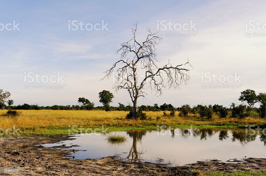 Water hole royalty-free stock photo
