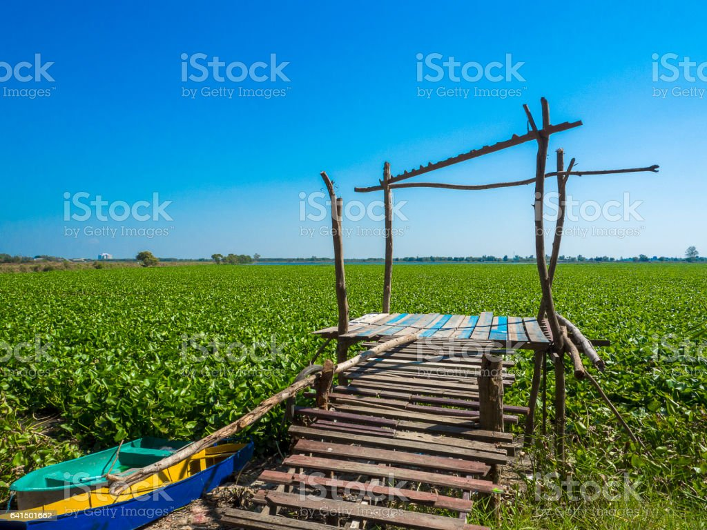 water hyacinth in lake with two boat and wooden pair stock photo