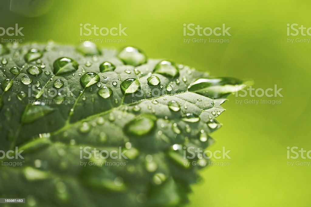 Water is Life stock photo