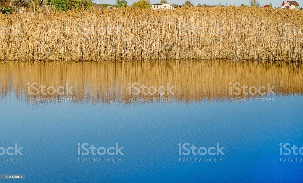 Water landscape plants stock photo