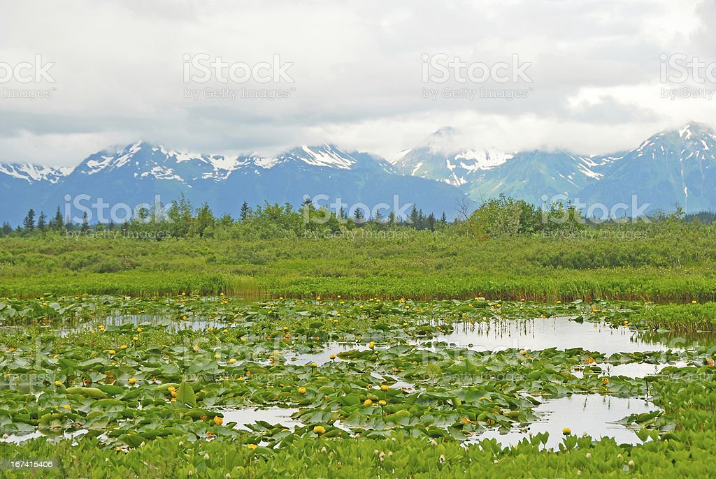 Water Lilies in a Mountain Valley stock photo