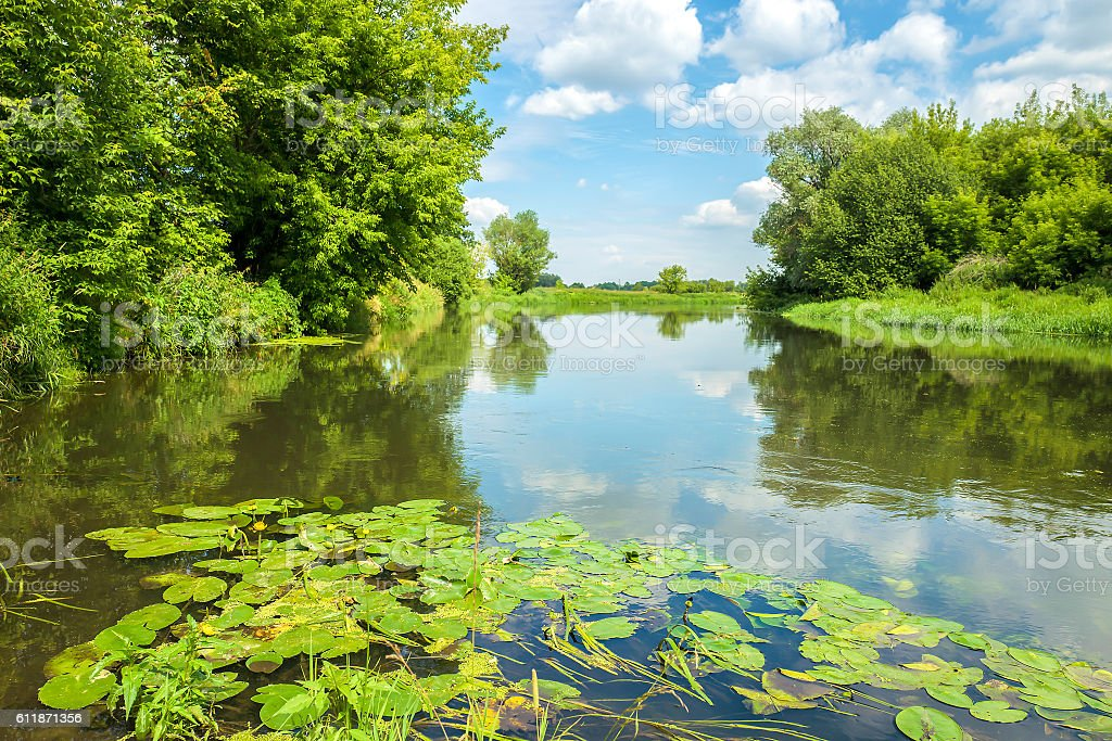 Water lilies on the Klyazma river in Russia stock photo