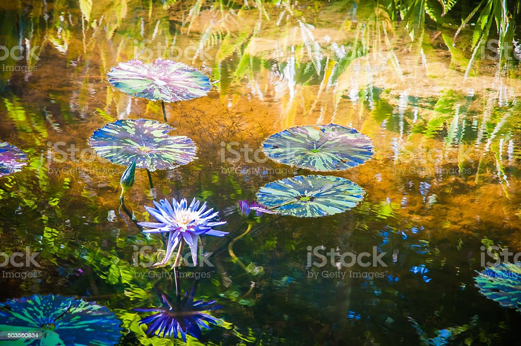 Water Lilies #1 stock photo