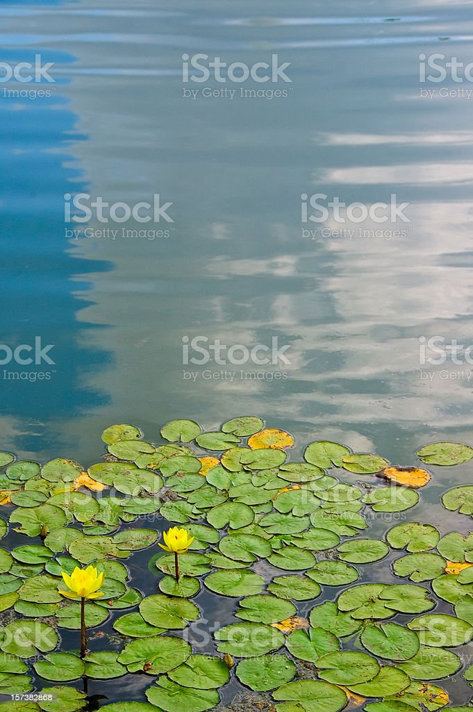 water lily abstract royalty-free stock photo