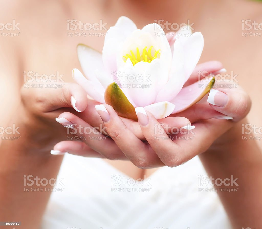 Water lily flower in hands stock photo