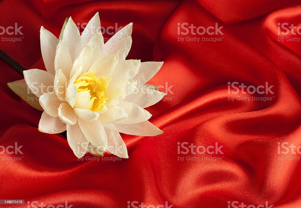 Water lily on red satin royalty-free stock photo