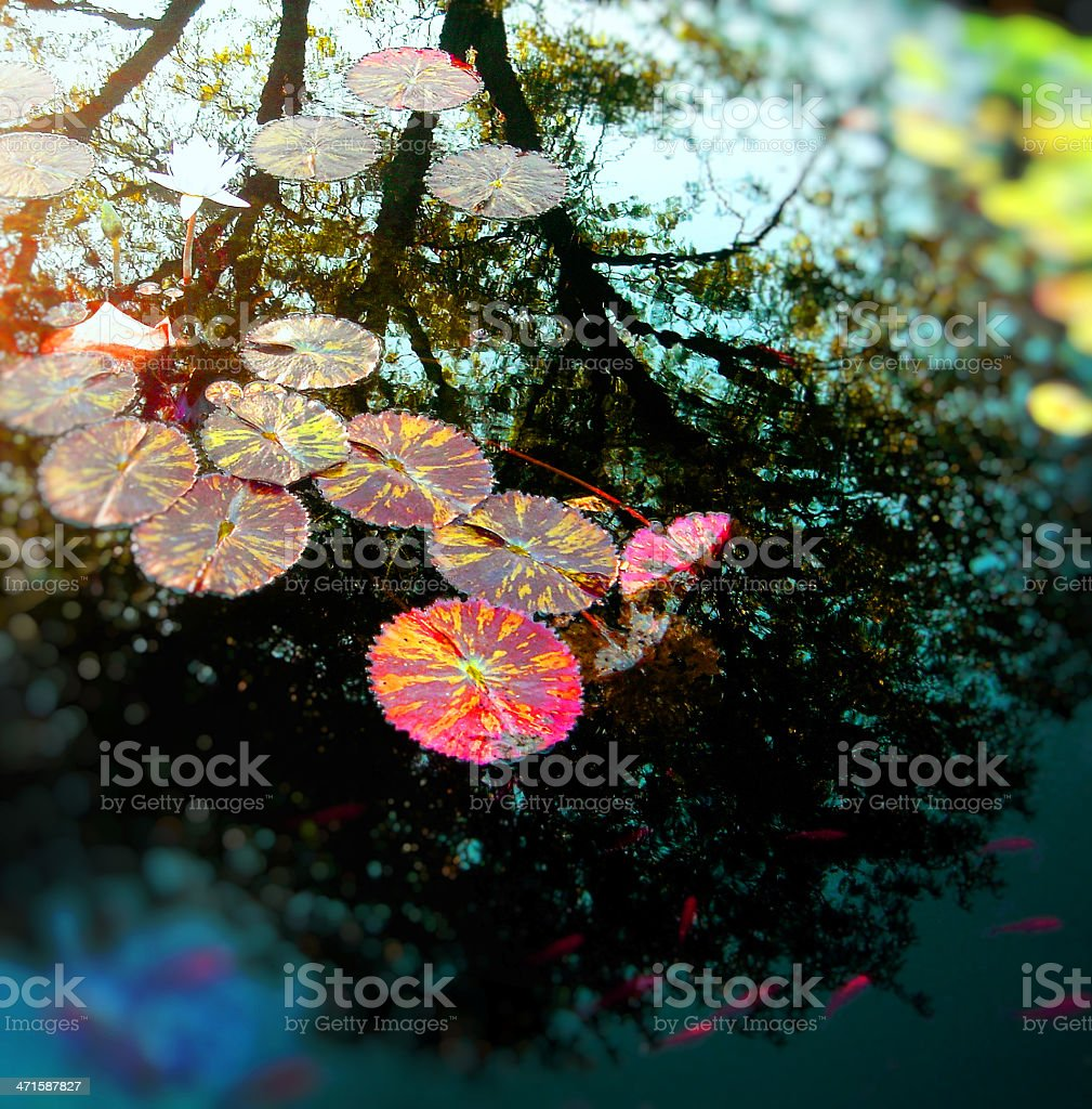 water lily with fish royalty-free stock photo