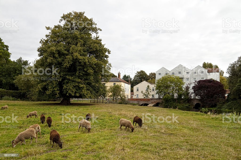 Water mill with Soay sheep grazing in meadow royalty-free stock photo