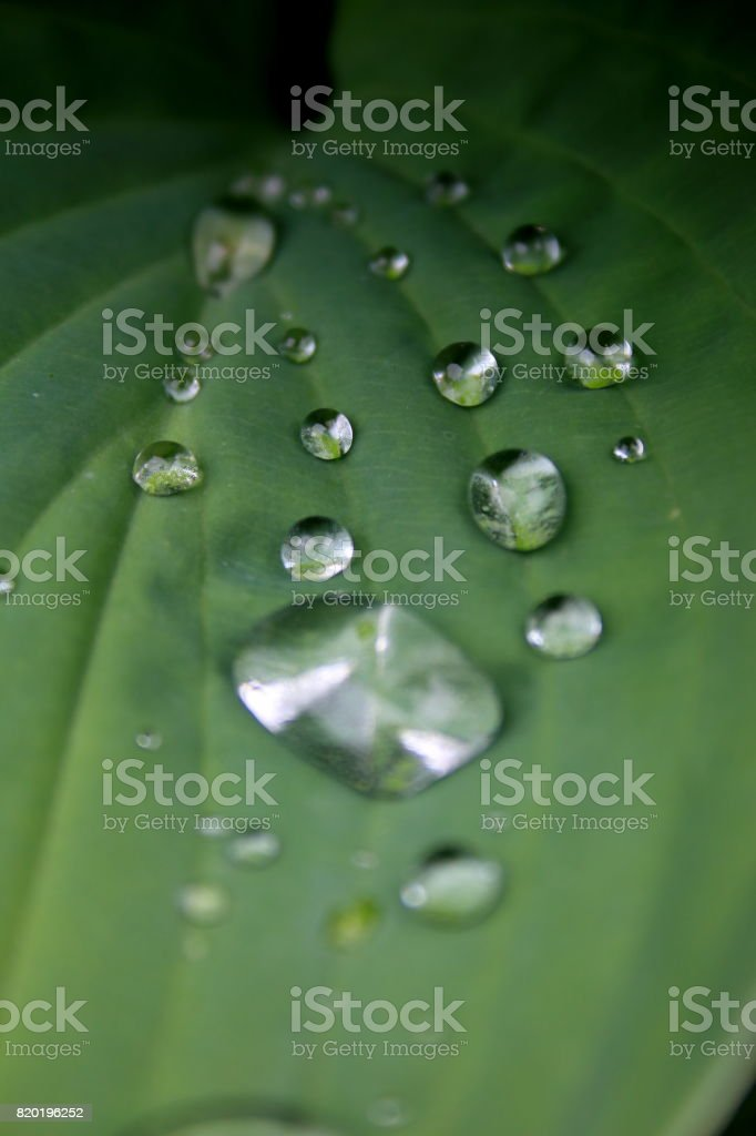 Water on green Leaves stock photo