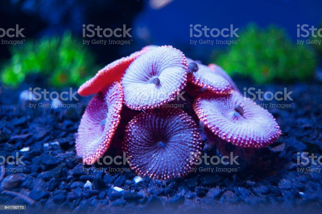 Water plant. Aquarium, marine world. Sea, ocen stock photo