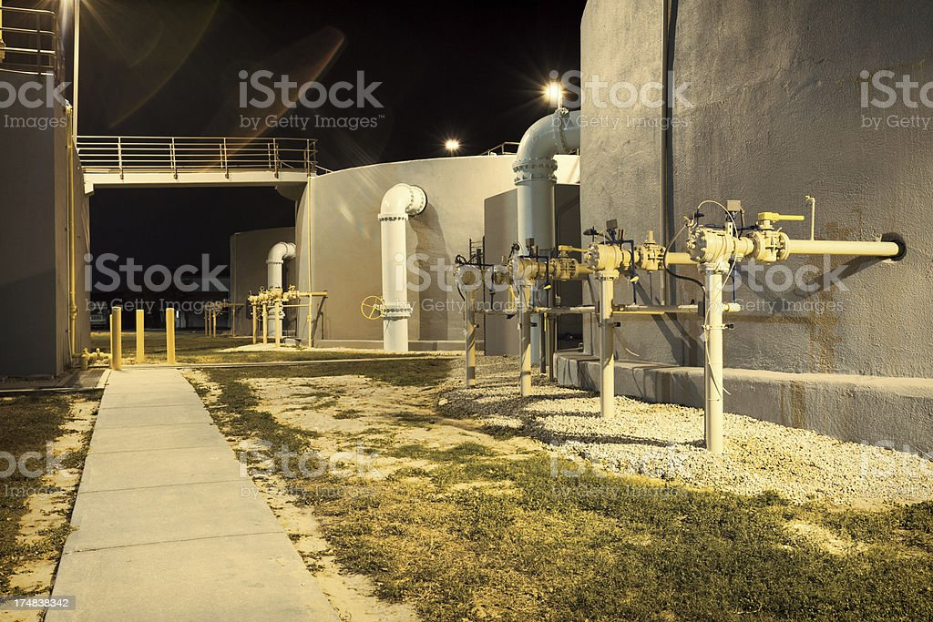 Water Plant royalty-free stock photo
