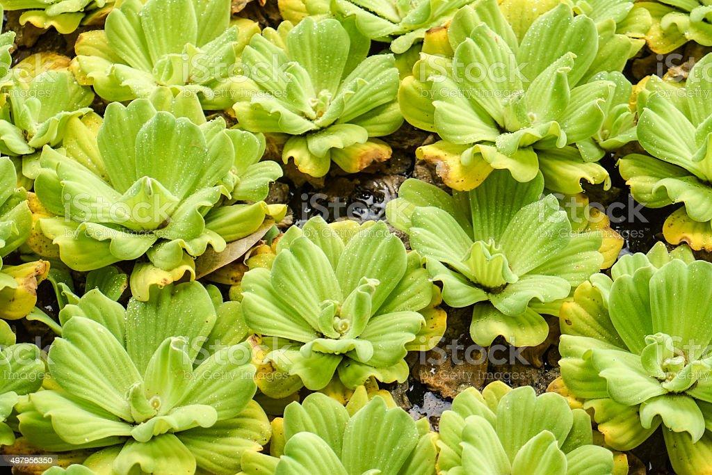 Water Plant stock photo