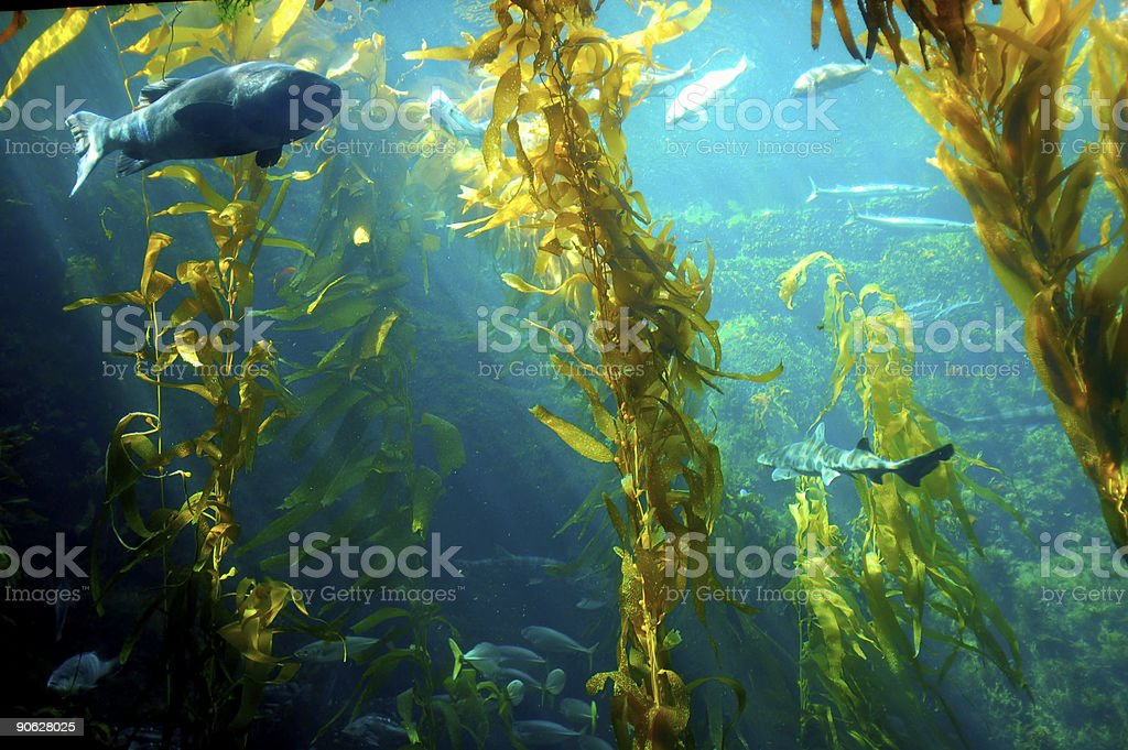 Water plants inside an aquarium with fishes stock photo