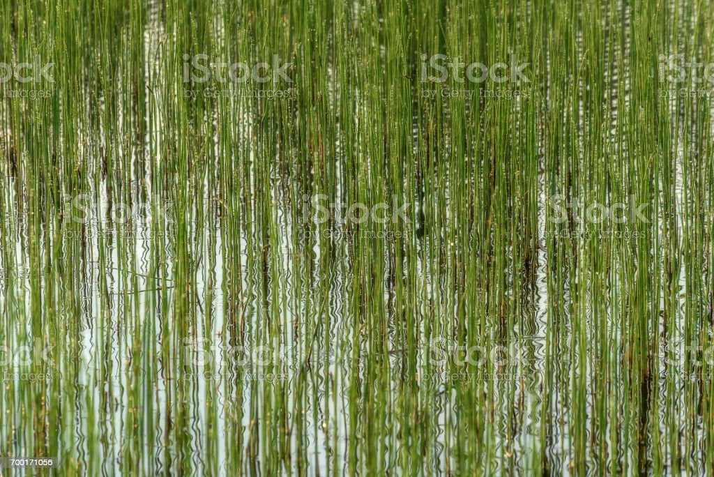 water plants reflection background green stock photo