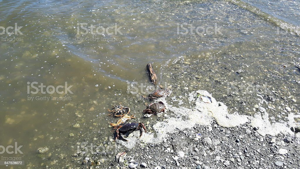 Water pollution killed animals stock photo